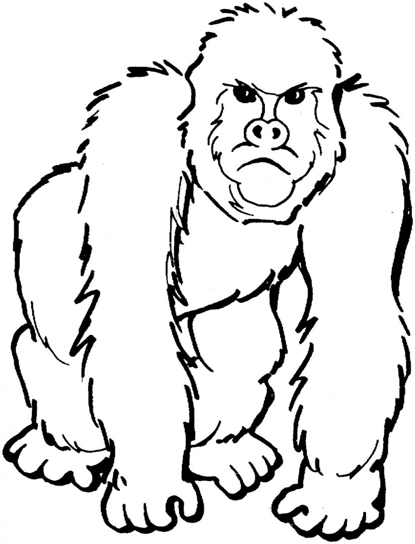 Galería de imágenes: Dibujos de gorilas