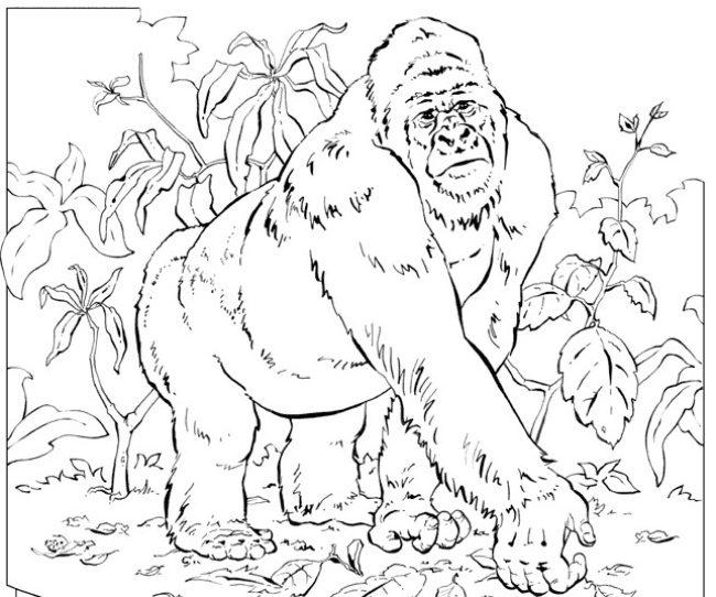 Dibujo para colorear a un gorila en la selva :: Imágenes y fotos