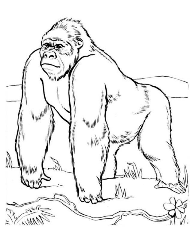 Dibujos de gorilas para pintar :: Imágenes y fotos
