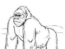 Dibujos De Gorilas